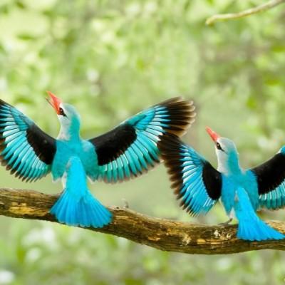 دیدن پرنده در خواب چه تعبیری دارد؟ / تعبیر خواب پرنده