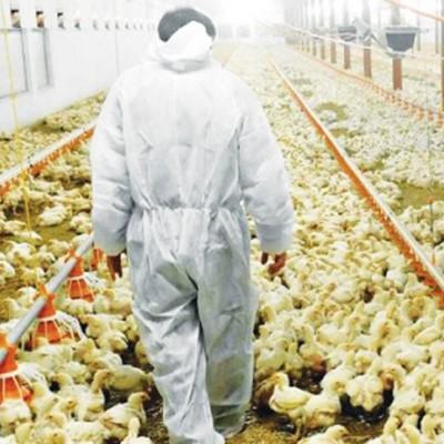 قیمت مرغ پایین آمد/ قیمت انواع محصولات پروتئینی در بازار