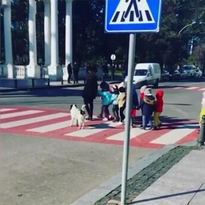 (فیلم) سگ ولگردی که بچه ها را از خیابان رد میکند