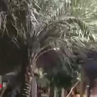 (فیلم) لحظه فرار وحشت زده مردم به خاطر تیراندازی ها در پارک